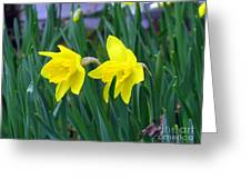 Jovial Jonquils Greeting Card