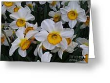 Joyful Jonquils Greeting Card