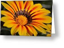 Jubilant Daisy Greeting Card