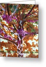 Judas Tree Jerusalem Greeting Card