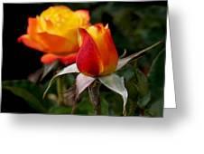 Judy Garland Rose Greeting Card by Rona Black