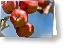 Juicy Harvest Greeting Card