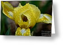 Juicy Lemon Petals Greeting Card