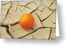 Juicy Orange And Drought. Greeting Card by Alexandr  Malyshev