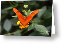 Julia Butterfly 1 Greeting Card
