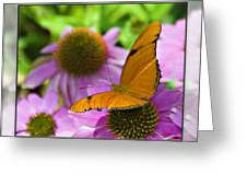 Julia Butterfly 2 Greeting Card