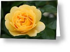 Julia Child Floribunda Rose Greeting Card
