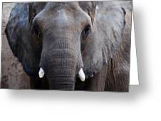 Jumbo Greeting Card