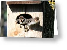 Jump Day Greeting Card