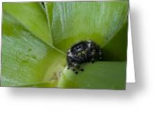 Jumper In Yucca Greeting Card