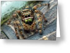 Jumper Spider 3 Greeting Card