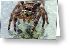 Jumper Spider 4 Greeting Card