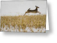 Jumping Doe In Corn Field Greeting Card