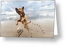 Jumping Dog Greeting Card by Eldad Carin