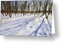 Jumping Shadows  Greeting Card