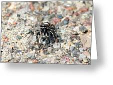 Jumping Spider Face On Greeting Card