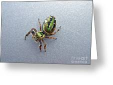 Jumping Spider - Green Salticidae Greeting Card
