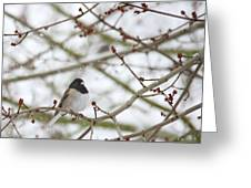 Junco In Snow Greeting Card