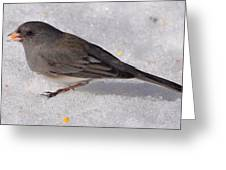 Junco In The Deep Snow Greeting Card