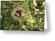 Junco Nest In The Lawn Greeting Card