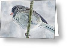 Junco On A Twig Greeting Card