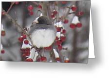Junco Puffed Up On Crabapple Tree Greeting Card