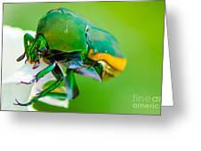 June Bug Fig Beetle Greeting Card