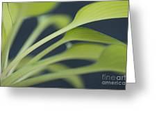 June Plantain Lily Close Ups Greeting Card