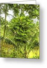 Jungle And Rice Field Greeting Card