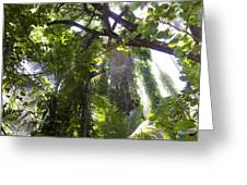 Jungle Canopy Greeting Card