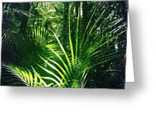 Jungle Fern Greeting Card