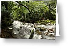Jungle Flow Greeting Card