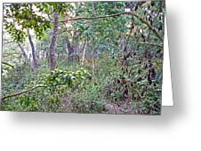 Jungle Forest In Chitwan Np-nepal Greeting Card