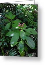 jungle in La Amistad National Park Panama 4 Greeting Card