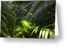 Jungle Web Greeting Card