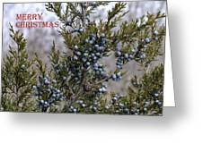 Juniper Berries - Merry Christmas Greeting Card