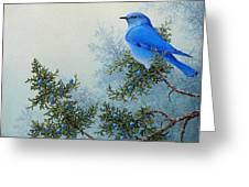 Juniper Berries Greeting Card