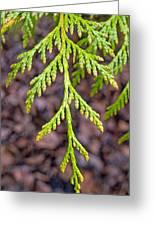 Juniper Leaf Greeting Card
