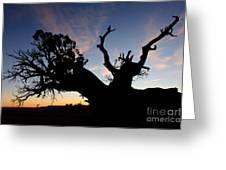 Juniper Tree, Canyonlands National Park Greeting Card