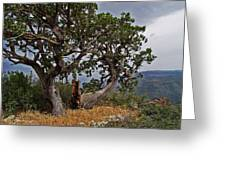 Juniper Tree On The Edge Of The Verde Valley Greeting Card