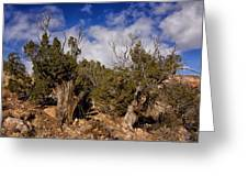 Juniper Trees At The Ghost Ranch Color Greeting Card