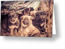 Junkyard Dogs Greeting Card