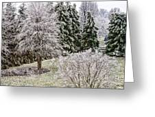 Ice Coating Trees And Lawn In A Back Yard Greeting Card