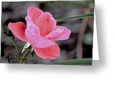 Just A Touch Of Color Greeting Card