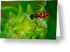 Just Beecause Greeting Card