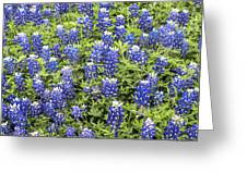 Just Bluebonnets Greeting Card