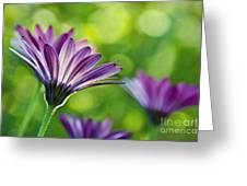 Just Daisies Greeting Card