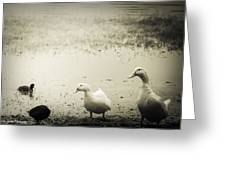 Just Duckie  Greeting Card