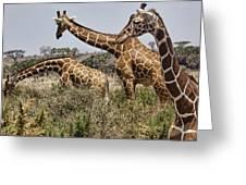 Just Giraffes Greeting Card