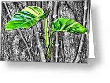 Just Green 2 By Diana Sainz Greeting Card